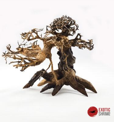 tronco bonsai nº1