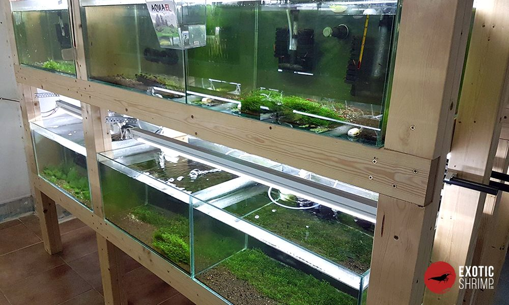 instalaciones y acuarios de exotic shrimp 1