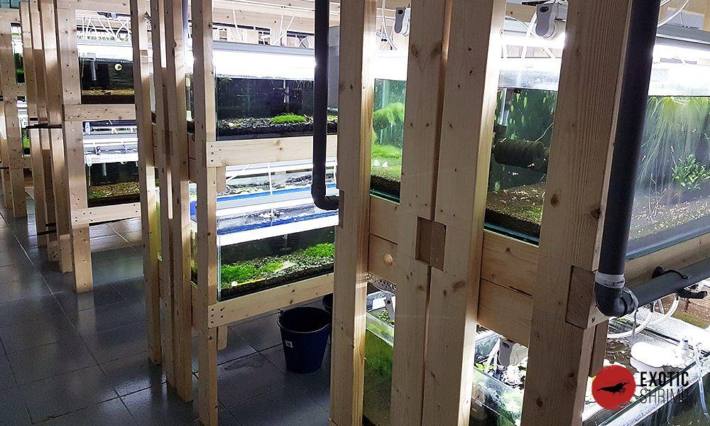 instalaciones y acuarios de exotic shrimp 2