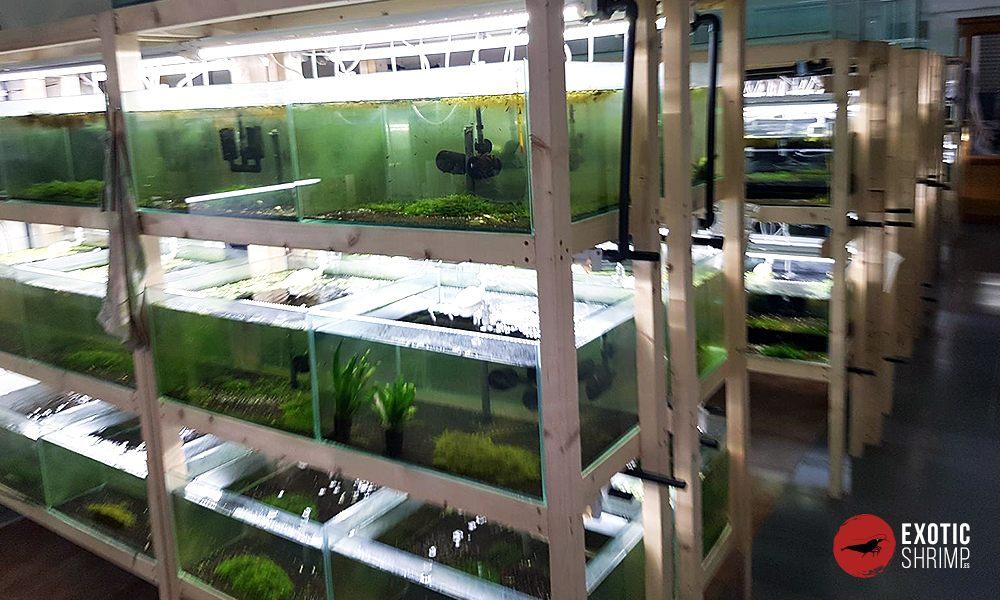 instalaciones y acuarios de exotic shrimp 3