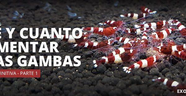 que y cuanto alimentar a las gambas parte 1 imagen destacada exotic shrimp