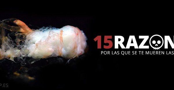 15 razones por que se mueren las gambas exotic shrimp imagen destacada