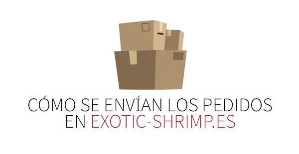 como se hacen los envios exotic shrimp imagen destacada