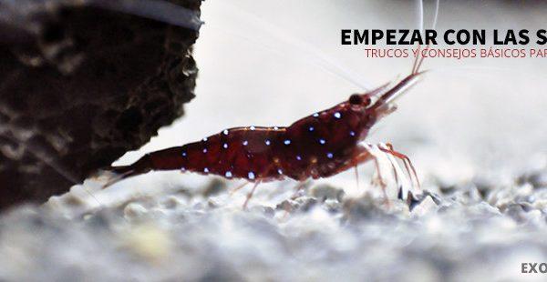 como empezar con las sulawesi exotic shrimp imagen destacada