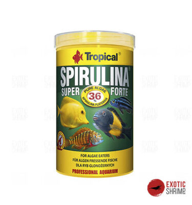 spirulina superforte tropical alimento para peces exotic shrimp imag destacada