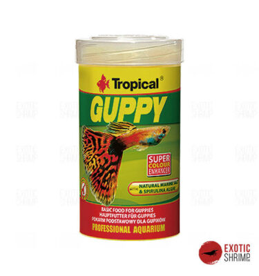 tropical guppy alimento para peces exotic shrimp imag destacada