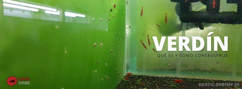 que es el vedin exotic shrimp imagen destacada