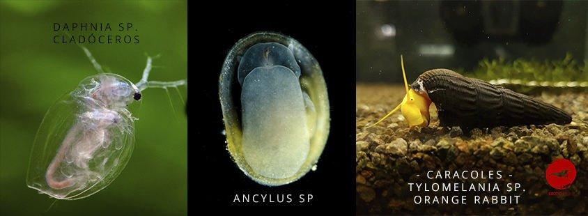 biodiversidad 2 exotic shrimp imagen destacada