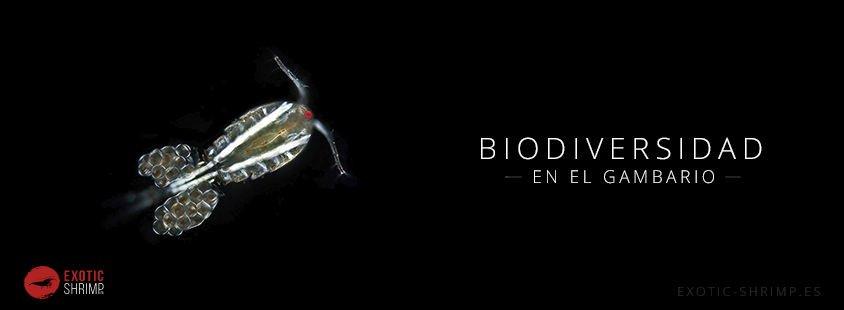 gambarios y biodiversidad exotic shrimp imagen destacada