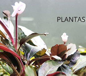 plantas en el gambario exotic shrimp imagen destacada