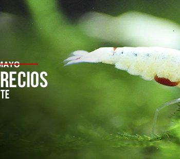 promociones mayo exotic shrimp imagen destacada